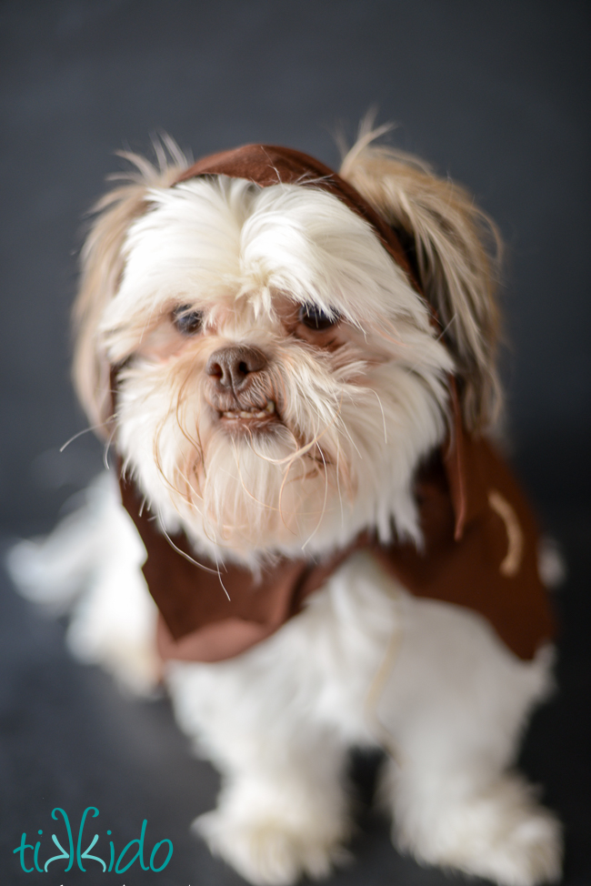 DIY no sew ewok Star Wars costume for dogs